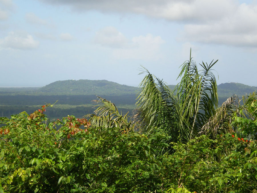 Montagne des singes guyane